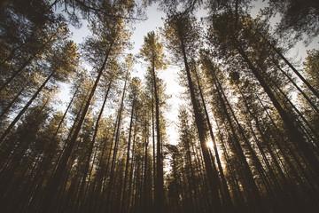 trees lens flare