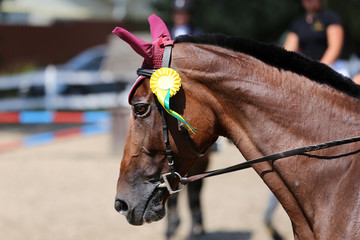 Unknown horse rider riding on equestrian event with the ribbons rosette of winners