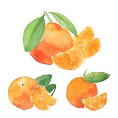 Orange watercolor illustration. Citrus fruit branch orange, orange fresh slice