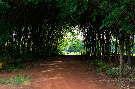 The gravel road through rubber plantations is shady and peaceful. In rural of Thailand.