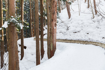 nature and landscape concept - snow path winter forest in japan