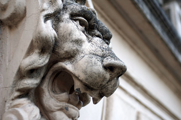 Sculpture of lion head on a marble wall close-up