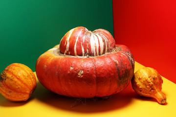 Diverse assortment of pumpkins on colorful background. Autumn harvest..