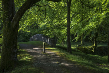 Morning Woodland