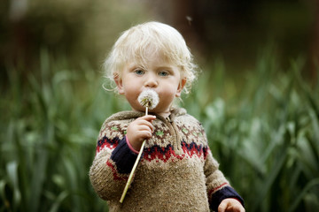 Portrait of cute boy holding dandelion while standing at farm