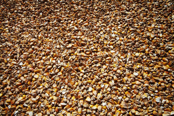 Dried corns backgrounds