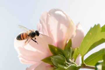 Close-Up Of Pink Flowering Plant and a Bee