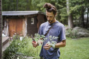 Man cutting plants in backyard