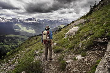 Rear view of hiker looking at mountain goat while standing on mountain