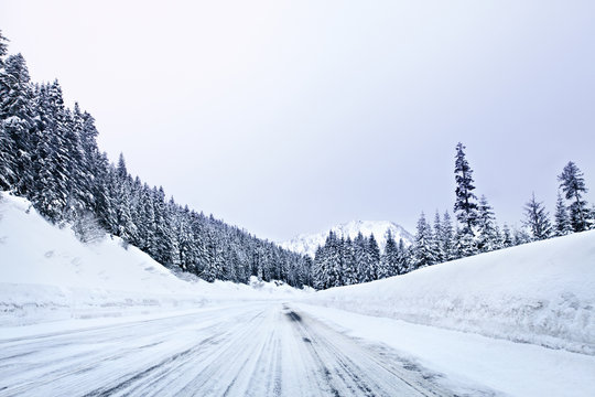 Snow covered road amidst pine trees against clear sky
