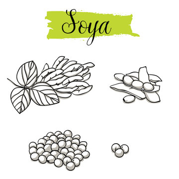 Beautiful vector hand drawn Soya, bean. Organic food, vector doodle illustrations collection isolated on white background. .