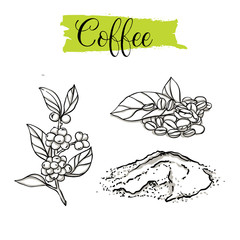Beautiful vector hand drawn Coffee, beans. Organic food, vector doodle illustrations collection isolated on white background. .