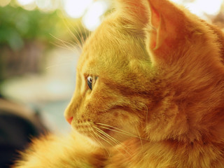Sunny portrait of cute red ginger cat in sunny summer day