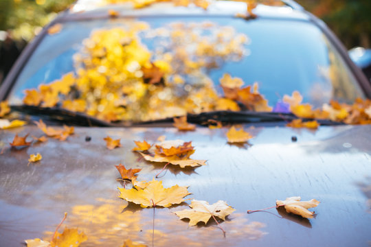Fallen yellow maple leaves lying on car windshield and hood in sunny weather, front view, soft focus. Autumn foliage, transport, season concept.