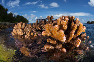Corals Are Left Out of Water at Low Tide