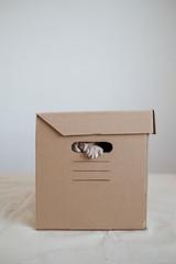 Cat peeking through a hole in a basket