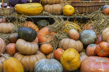 Composition of pumpkins with hay at wood background