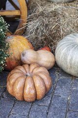 Composition of pumpkins with hay at paving background