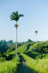 Paved pathway among palms