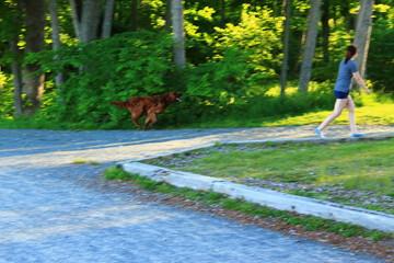 Dog running - Walking Tours in Canada