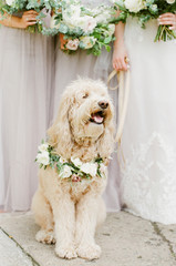 Fur baby bridesmaid