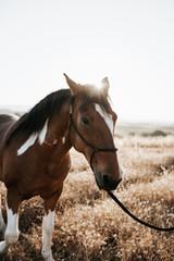 Horse walking at sunset