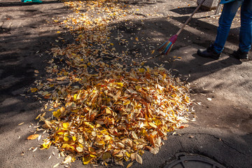 Cleaning of the territory from leaves in autumn. people with brooms, rakes and bags