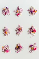 Various flower petals