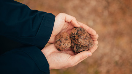 Catching truffles at forest