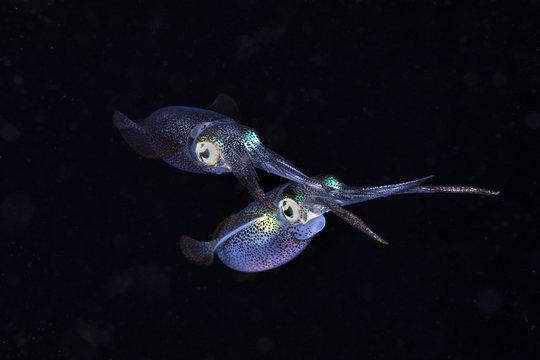 Floating squid in black water