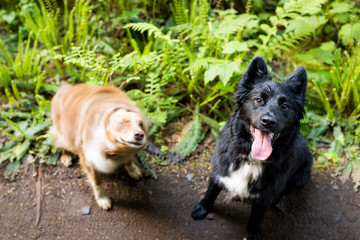 Two dogs on a walk in the forest, one of which is shaking off water