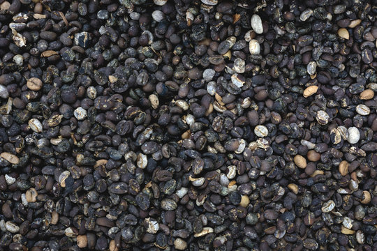 Copi Luwak coffee seeds seen from above