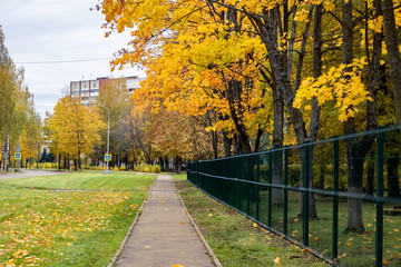 Alley with autumn trees and yellow leaves