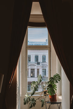 Big monstera plant in a room with a view