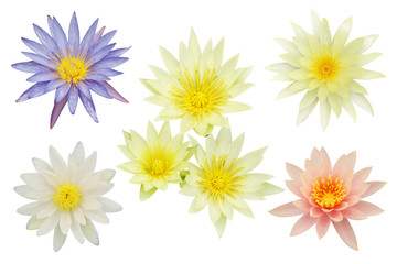 Photo sur Plexiglas Nénuphars Lotus, Water Lily Flowers Isolated on White Background
