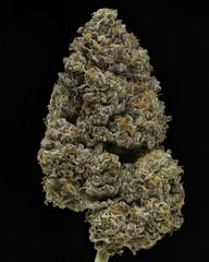 Jet Fuel Gelato #3 dried cannabis flower against black