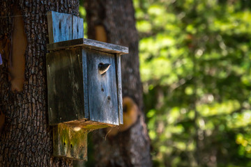 Baby purple martin waiting in a birdhouse for its parents to return with food.