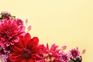 Poster Dahlia Flat lay composition with beautiful dahlia flowers and space for text on color background