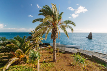 Palm trees and Atlantic Ocean in Madeira