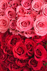 Pink and red roses background