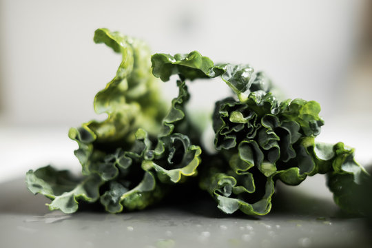Kale cabbage leaves on a clean grey background