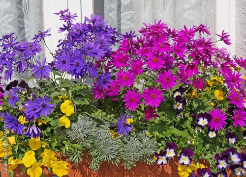 Blumenkasten am Fenster mit bunten Blumen\