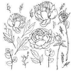 isolated objects; flowers; peonies; roses; black;