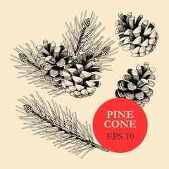 Vector set of pine cones and branches