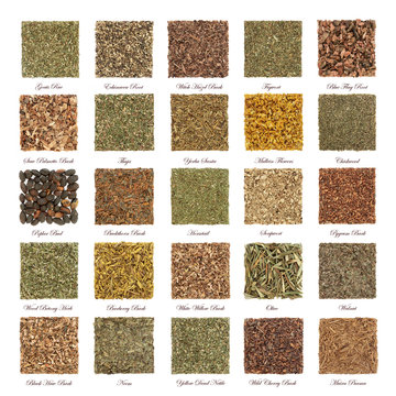 Large collection of herbs used in natural alternative herbal medicine with dried leaves, flowers, roots and bark in square shapes isolated on white background with titles.