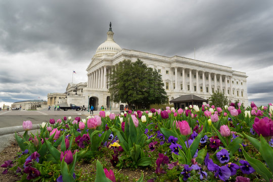 The United States Capitol Building in Washington, D.C.