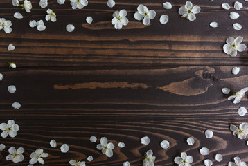 Tree flowers on wood. Top view. Spring background. Copy space