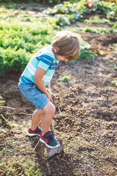 Little Boy Digging