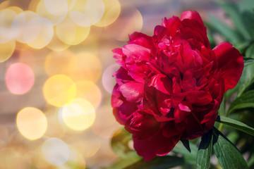 Closeup of beautiful red peony flower with nice bokeh