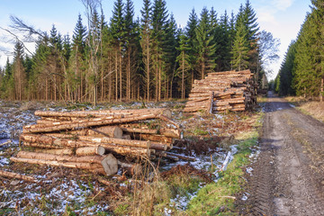 Timber piles on a forest road